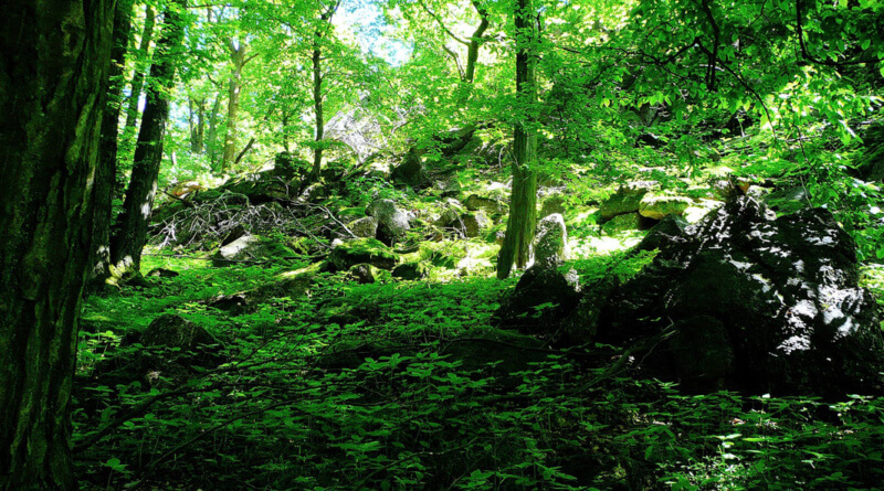 Potęga z natury – zobacz co oferuje nam sama przyroda